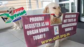 South Africa's population is estimated to have increased to just under 60-million people last year, but the country only has 342 624 registered organ donors. File picture: Ashraff Hendricks