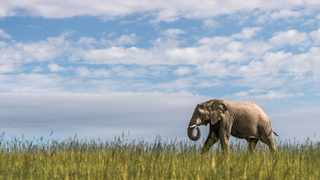 Shamwari Private Game Reserve Wildlife Rehabilitation Centre will host a live broadcast on World Elephant Day. Picture: Supplied.