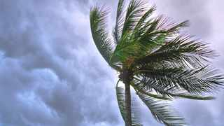 A palm tree facing severe winds. Picture: Supreg Suksai/Pexels