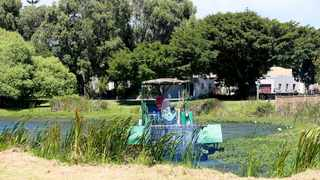 A municipal worker cleans the Mocke River in Diep River of alien vegetation. Picture: Leon Lestrade/African News Agency/ANA.