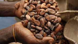 Hershey's move to buy cheap beans from the New York futures exchange is an attempt to derail plans by Ivory Coast and Ghana to increase farmers' income, the Ivorian cocoa regulator alleged in a letter seen by Reuters on Wednesday. Photo: Reuters