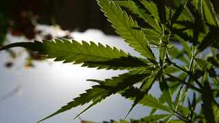 """Legalising the consumption of cannabis """"in private"""" has created a number of challenges for employers and employees. Picture: African News Agency (ANA)"""