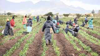 The government has spent more than R2.3 billion in the acquisition of restitution farms for more than 231 communal property institutions. Photo: Tracy Adams/African News Agency (ANA)