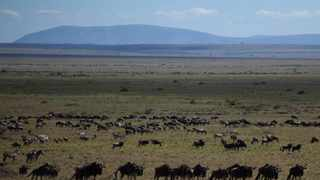 East Africa's great wildebeest migration went largely unwatched this year due to the coronavirus pandemic. Picture: AP Photo/Rebecca Blackwell.