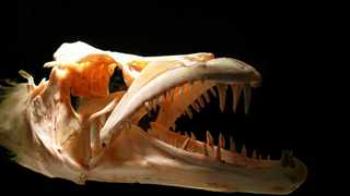 """proves beyond reasonable doubt"""" that Spinosaurus was an """"enormous river-monster"""""""". Photo: Public Domain Pictures from Pixabay"""