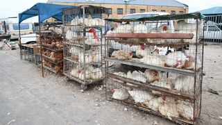 The stopping of chicken imports would result in the increase of chicken prices that would exclude the poor. Picture Leon Lestrade. African News Agency/ANA.