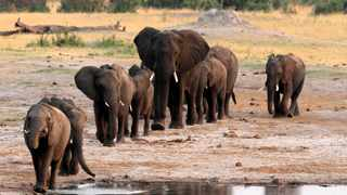 A herd of elephants walk past a watering hole in Hwange National Park, Zimbabwe. File picture: Philimon Bulawayo/Reuters