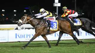 Twist Of Fate makes his first appearance as a gelding this weekend in the Grade 3 Matchem Stakes over 1400m at Durbanville. Photo: Supplied