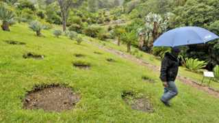 140804. Cape Town. Conservation Research Horticulturist Phakamani Xaba walks past empty spots where Cycads were stolen at Kirstenbosch Botanical Gardens. 13 Cycads, with a value of approx R200 000 were stolen over night from the Botanical gardens in Kirstenbosch. Picture Henk Kruger/Cape Argus
