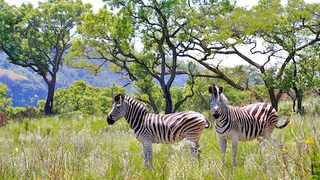 Shongweni Nature Reserve is a delight for adults and kids alike. Picture: Supplied