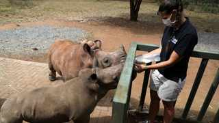 Zanrie Van Jaarsveld feeds orphaned rhinos Kolisi and Amelia, amid the spread of the coronavirus disease (Covid-19), at a sanctuary for rhinos orphaned by poaching, in Mookgopong, Limpopo. Picture: Siphiwe Sibeko/Reuters