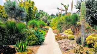 A water-wise garden which has mainly been planted with succulents and cacti, but wild grasses and indigenous trees are also an essential part of being water-wise. Picture: Chris Chatham/Unsplash