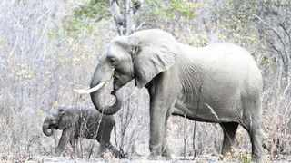 Killings of locals and tourists by wild animals are common in Zimbabwe. Picture: Philimon Bulawayo/Reuters