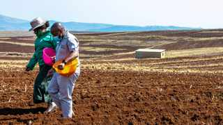 The planting season was unveiled this week where the provincial government led by the Department of Agriculture and Rural Development planted a co-operative 400-hectare farm in Umzimkhulu. Pictures: SIBONISO MNGADI