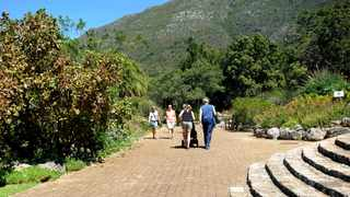 Kirstenbosch is an important botanical garden nestled at the eastern foot of Table Mountain in Cape Town. Photograph: Ayanda Ndamane /African News Agency(ANA)