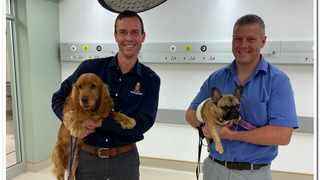 Specialist surgeons Dr Adriaan Kitshoff and Dr Ross Elliott with Tallen and Daisy. Photo: Supplied