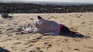 A dolphin stranded on a Port Elizabeth beach has been rescued and returned to sea. Picture: NSRI