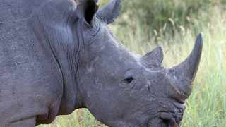 Rhino poaching is on the rise again in South Africa since the government loosened coronavirus restrictions, following a year-long lull due to the pandemic, wildlife parks say. Picture: Shelley Kjonstad, ANA.