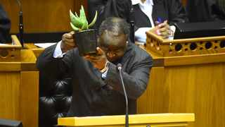Finance Minister Tito Mboweni holds an aloe plant as a metaphor for an economy in need of special care. File picture: Phando Jikelo/African News Agency (ANA)
