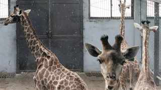MORE than 5 000 live wild animals were exported to China from South Africa over three years. Ban Animal Trading