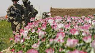 U.S. Army soldiers walk past a poppy field during a patrol through the village of Jelawar in the Arghandab Valley north of Kandahar April 18, 2011. REUTERS/Bob Strong (AFGHANISTAN - Tags: MILITARY POLITICS)