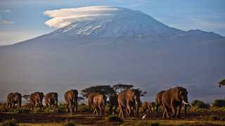 A herd of adult and baby elephants walks in the dawn light as the highest mountain in Africa, Tanzania's Mount Kilimanjaro, is seen in the background, in Amboseli National Park, southern Kenya. Photo: Ben Curtis/AP