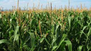 According to Agbiz, in mid-2020, the concern about trade restrictions had waned as the G20 discouraged global grain-exporting countries from banning exports. File photo.