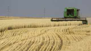The Land and Agriculture Development Bank of South Africa said yesterday a R7 billion equity appropriation announced in the February 24, 2021 Budget would be applied to bring the bank out of a default situation. Photo: Reuters.