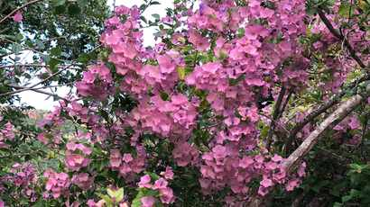 Time to prune: Getting ready for Spring