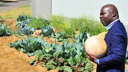 Who exactly is Tshwane's pavement vegetable planter known as 'Cabbage Bandit'?