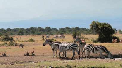 Ezemvelo KZN Wildlife temporarily closes another resort due to Covid-19 infection