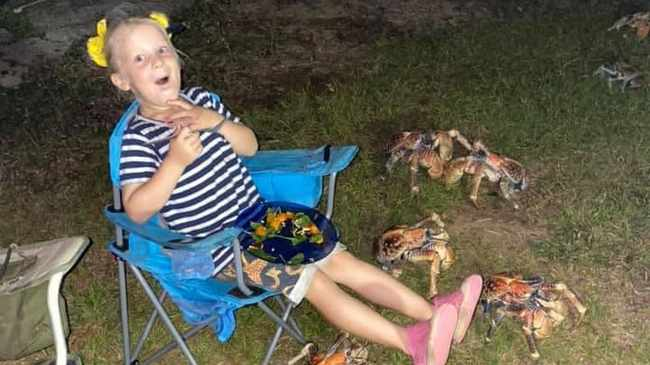 LOL! Robber crabs gatecrash family picnic on Christmas Island