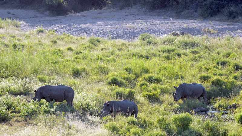 Kruger National Park is more accessible for people with disabilities, Newsline