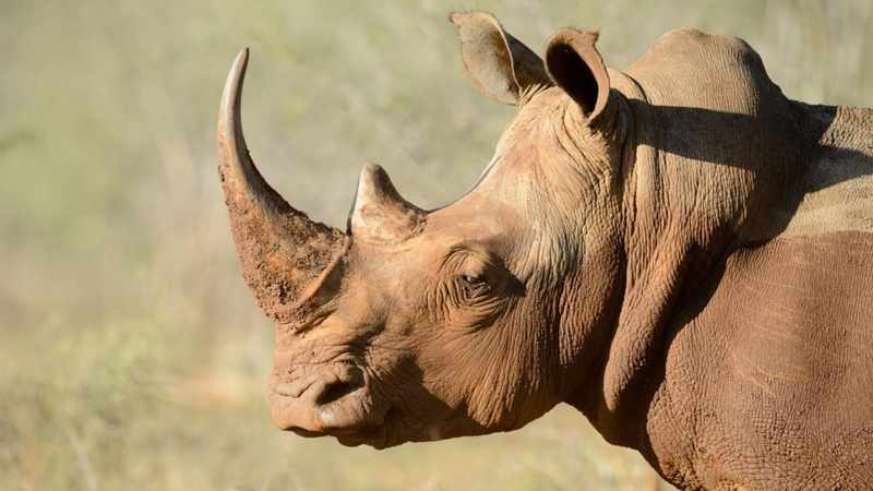 MEC lauds concerted  conservation efforts on World Rhino Day, Newsline
