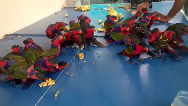 733f64b6 847a 5929 b118 7590901d8c46 - Smuggled parrots found stuffed into plastic bottles on ship