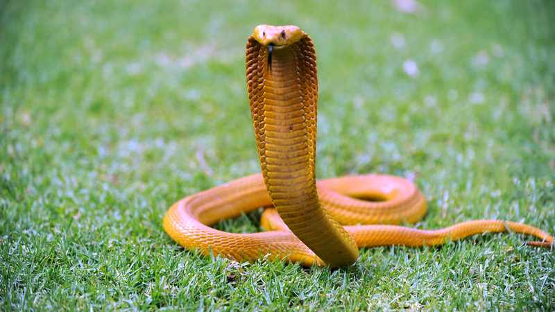 Safety from serpents, Newsline