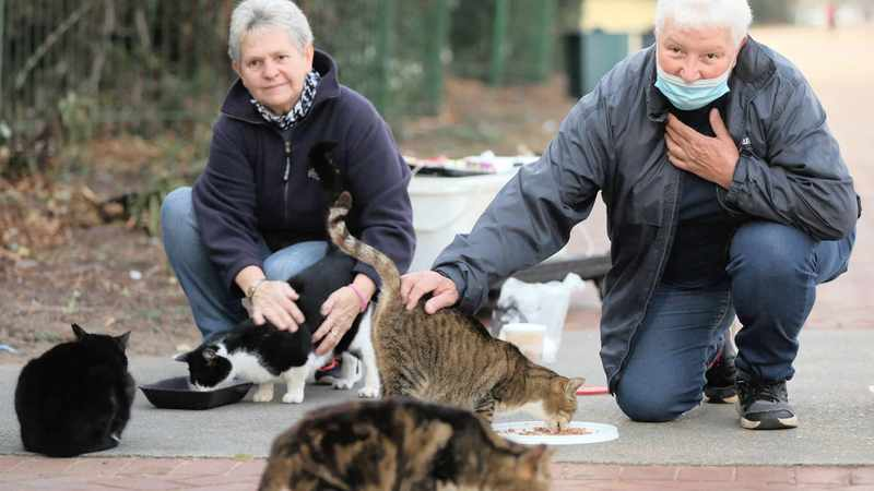 Feral cat feeders rise with the birds, Newsline