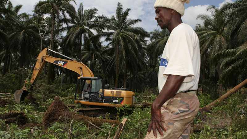 A tropical forest is being razed illegally, Greenpeace says, Newsline