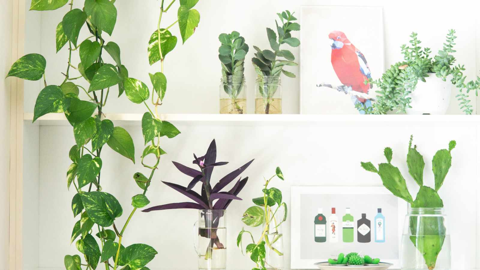 3 Sustainable gardening tips to try out