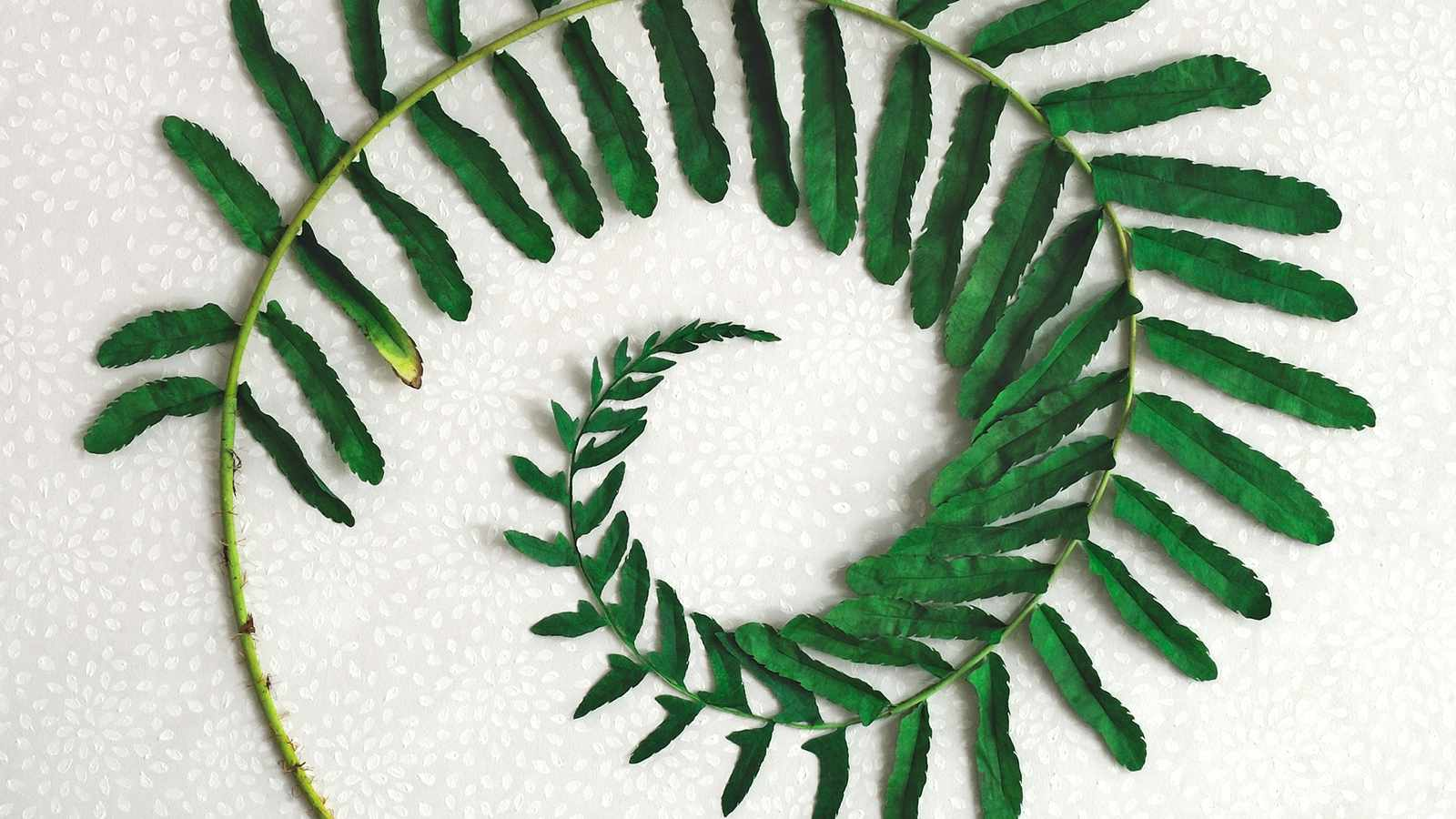 A larger-than-life collection of sculptures elevates the timeless fern