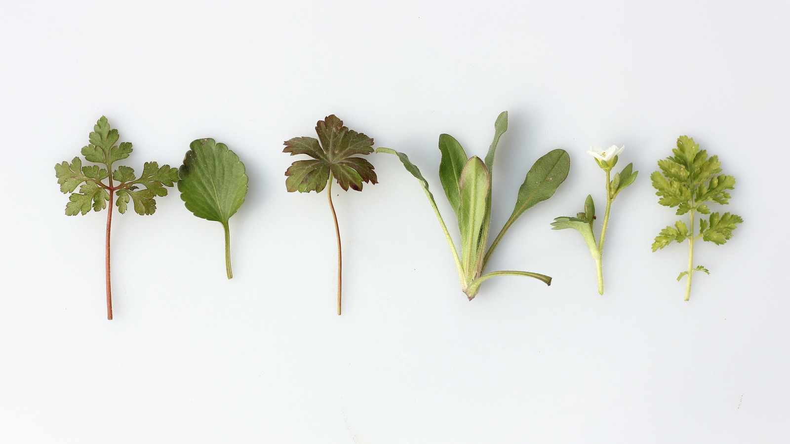 Five winter herbs to grow (and eat)