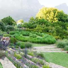 A boundless Cape Garden above the eastern slopes of Table Mountain