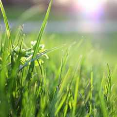 Why we shouldn't be cutting our lawns, and what you can do instead