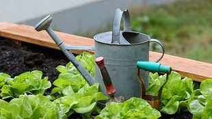 Why now is the best time to start a veggie garden