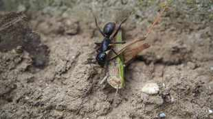 Opinion - The Ant and the Grasshopper: a Covid-19 fable