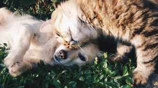 Are you wondering where to buy pet food online?