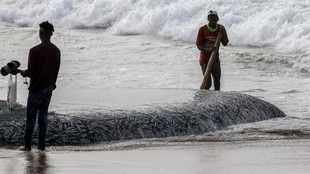 Subsiding cold front could pick up lull in sardine activity in KZN