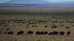 Virus keeps tourists from Africa's great wildlife migration