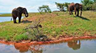 Here's why Zimbabwe tourism won't be the same again post Covid-19