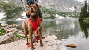 How to choose the best harness and lead for your dog